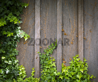 Ivy Wall Frame