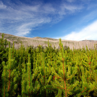 Flathead National Forest - Montana