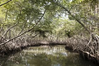 Mangroven, Dominikanische Republik