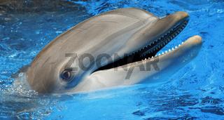 Dolphin in Tenerife