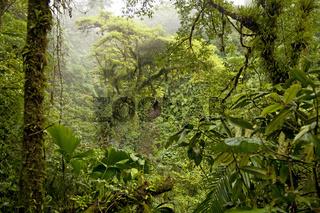 dichte Vegetation im Regenwald des Nationalpark Vulkan Arenal beim Ort La Fortuna