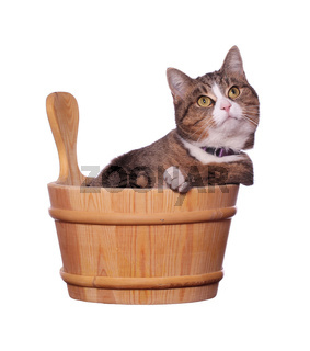 cute cat in wooden bowl