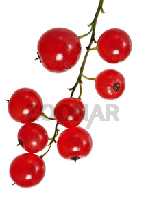 a bunch of red currant, isolated on white