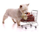 Hund schnuppert am Einkaufswagen