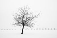 Bare Tree In Winter - Black And White Snow Scenery