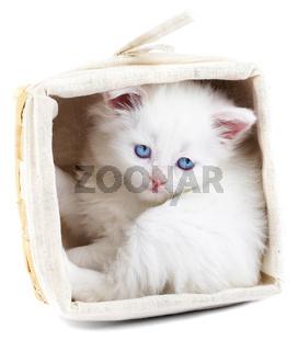 White kitten in a basket.