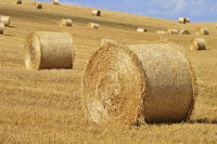 Straw bales on corn fields after harvest