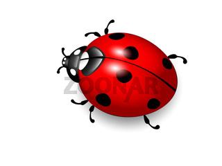Ladybird illustration of ladybug on white