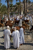 at the livestock market, Nizwa, Sultanate of Oman