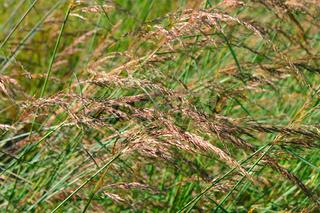 Prairie Grass Background