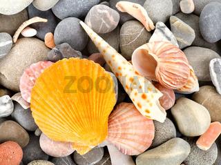 Starfish and sea shells