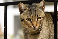 Portrait of a tiger cat
