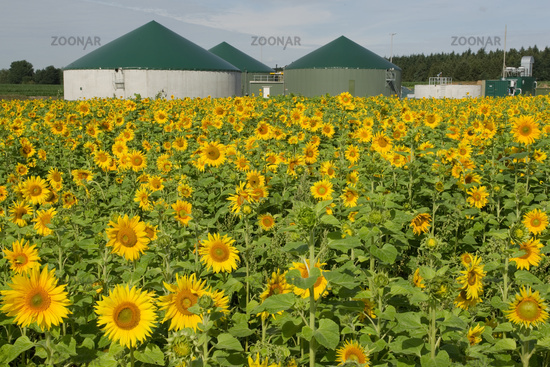 Biogasworks with sunflowerfield
