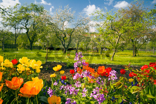 Blumen vor Streuobstgarten