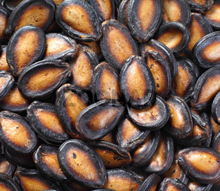 black melon seed for chinese new year