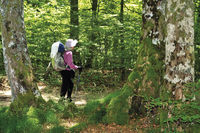 Spain: Pilgrim in the forest near Roncesvalles