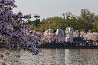 Martin Luther King Memorial in Washington DC with Cherry Blossoms