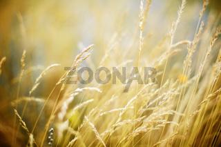 the field blur