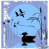 ducks silhouette on sunset background