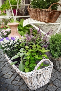 Herb leaf selection in a rustic wooden basket including