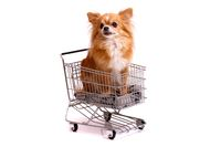 Dog Chihuhahua in Shopping basket