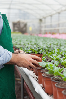 Garden center worker putting potted plant down