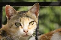 Cat in Greece