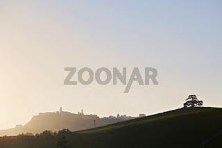 libanesische Zeder, Blick auf La Morra, Piemont, Italy