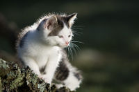 Cat, kitten on branch in the back-light