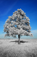 Fantastically unreal white tree on blue sky background