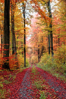 Herbstwaldweg im Oktober