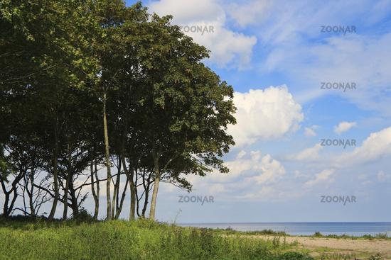 vegetation on the Coast