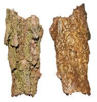 Termites life  result concept