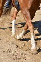 Legs of a horse doing dressage