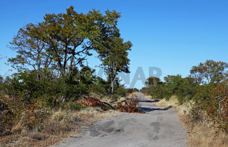 Ausgefahrene Piste im Chobe Nationalpark, Botswana; dirt road in Chobe National Park, Botsuana