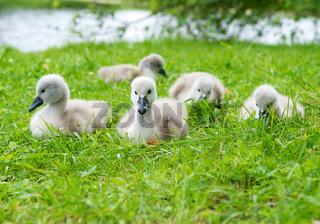 Cute ducklings outdoors