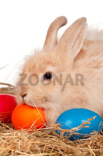 Rabbit with Easter eggs