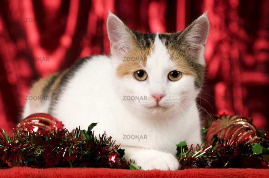 kitty with christmas decoration