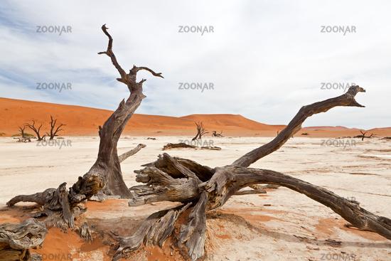 Death trees in desert Namib