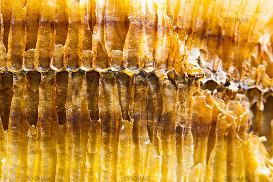 Closeup of the side of honey comb on a sunny day