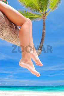 Relax on palm