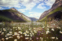 Field of wild flowers with Rocky Mountains in back