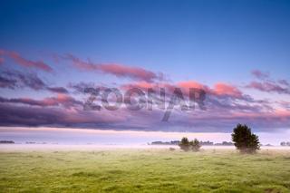 Dutch field in morning fog