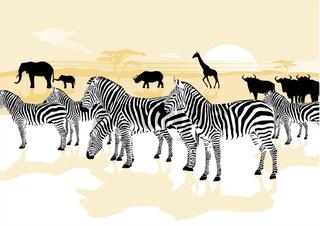 Zebras und Wildtiere