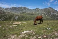Horses on a alp