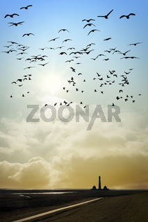 Lighthouse with birds