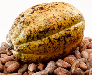 cacao bean