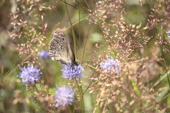 meadow with butterfly