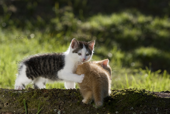 two kitten on branch in the back-light