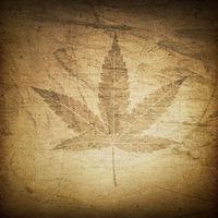 Cannabis leaf grunge background